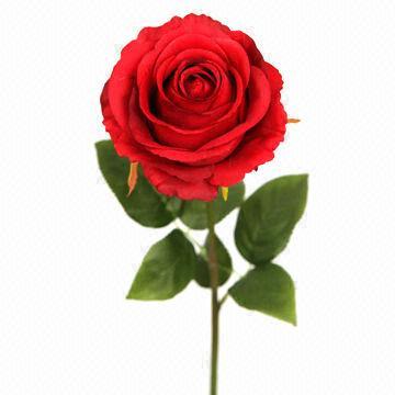 Real single rose flower, OEM orders are welcome | Global