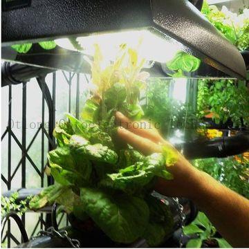 Plant Grow Induction Lighting Hot
