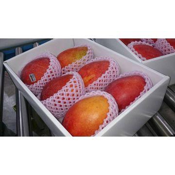 High Quality Fresh Irwin mango Apple Mango From Taiwan