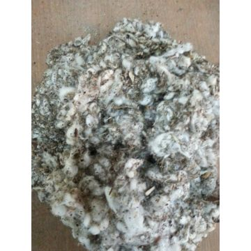 Cotton waste for mushroom cultivation | Global Sources