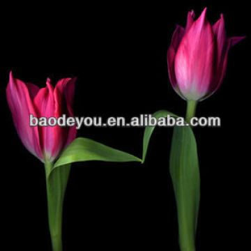 Hot Sale 1 High Definition Art Flame Handicrafts Tulip Canvas