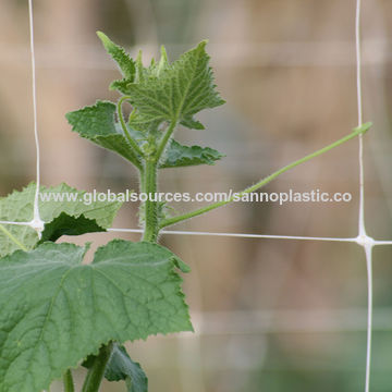 ... China Vegetable Trellis And Garden Trellis Netting ...