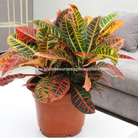 China45cm Artificial Fake Synthetic Plastic Plant Garden Croton Tree Bonsai On Global Sources