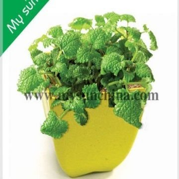 China Bamboo Fibre Biodegradable And Eco Friendly Flower Pots