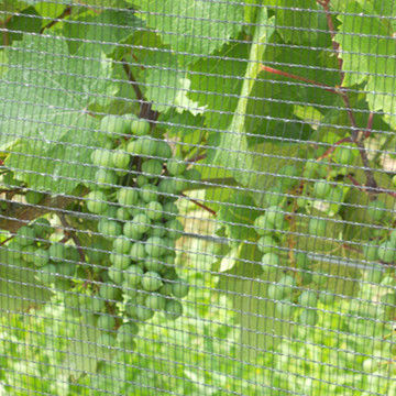 Agricultural HDPE Plastic Vineyard Invisible Bird Netting