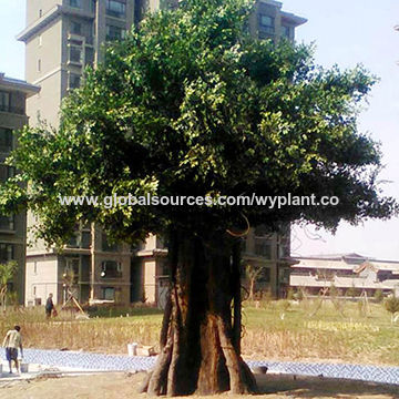 China 7 Meters Factory Hot Sale Artificial Synthetic Simulation Big Indoor Outdoor Green Banyan Ficus Tree On Global Sources,Steamed Broccoli Brockly