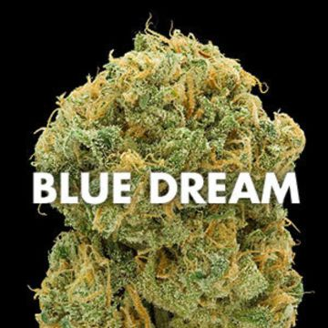 Buy Sour Diesel,AK47,Purple Haze,Orange Kush,Blue Dream