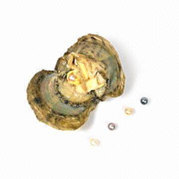 best service 9cc57 60e8e China Wholesale Canned Akoya Wish Love Gift-Bulk Oyster with Pearl