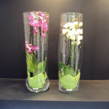 Clear Glass Orchid Vase Terrarium Global Sources
