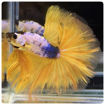 Export live tropical fish