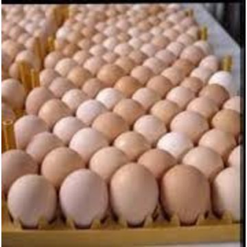High Fresh Table Eggs Brown And White and AFRICAN GRAY PARROTS FOR