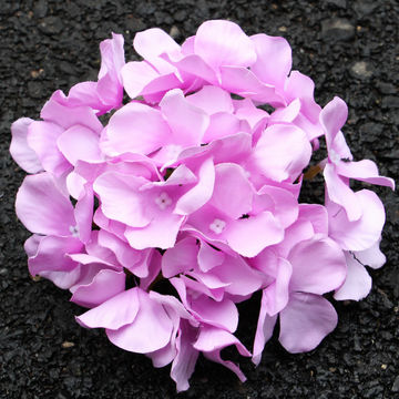 China artificial flowers from jinhua exporter yiwu resource import china 2018 hot selling autumn color hydrangea silk cheap wholesale artificial flowers mightylinksfo