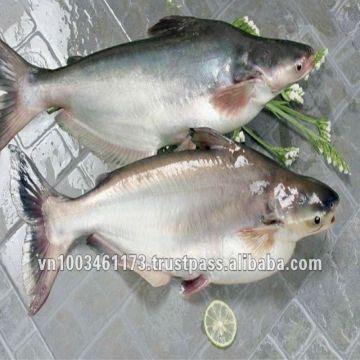 Frozen Pangasius Basa Fish Catfish Swai Fish Seafood Pangasius