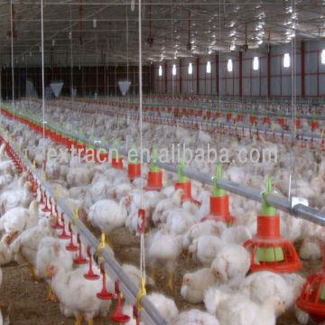 Broiler Feed Pan System | Global Sources