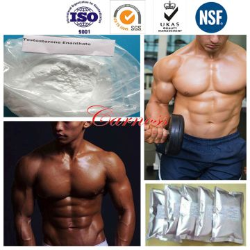 5721-91-5 Testosterone Decanoate Raw Steroid Hormone Powders