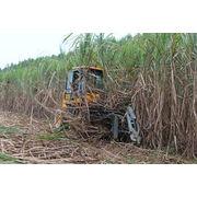China High Output Whole Stalk Sugar Cane Harvester/Combine Cane Harvesting Machine