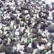 Wholesale Dried Morchella Nature, Dried Morchella Nature Wholesalers