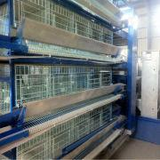 Wholesale Whole Broiler Chicken Cage, Whole Broiler Chicken Cage Wholesalers