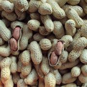Peanut from China (mainland)