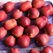 Huaniu Apple from China (mainland)