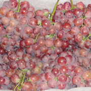 Grape from China (mainland)