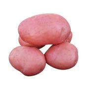 Potato from China (mainland)