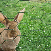 Rabbit wire netting Manufacturer