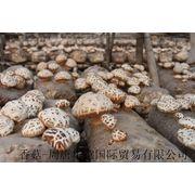 Fungi Fungus Manufacturer