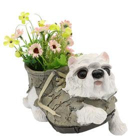 Dog from China (mainland)