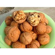 Wholesale New Crop Walnut, New Crop Walnut Wholesalers