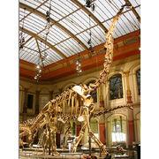Dinosaur skeleton from China (mainland)