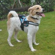 Hong Kong SAR Service Dog Harness