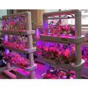 LED Hydroponic Cultivators from South Korea