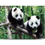 Wholesale Lovely Panda Visual effect 3D Lenticular poster, Lovely Panda Visual effect 3D Lenticular poster Wholesalers