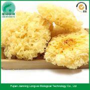 Fungus Manufacturer