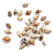 Real Small Sea Snail Shell Beads from China (mainland)
