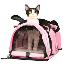 Cat outdoor travel pet carrier new material cute d from China (mainland)