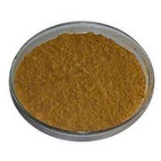 Natural Bitter Melon Extract Powder from Shanghai Yung Zip Pharmaceutical Trading Co., Ltd.