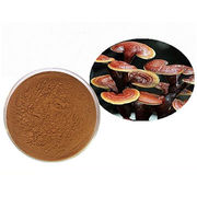 China Natural Reishi Mushroom Extract Powder