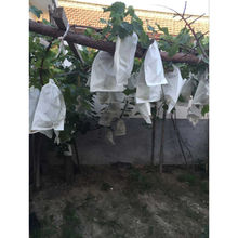 Protection Paper Fruit Bag for Guava, UV Resistant, Aging Resistant, Weather Resistant