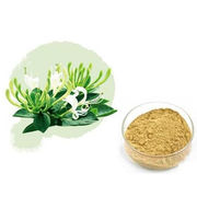 Natural Honeysuckle Extract Powder from Shanghai Yung Zip Pharmaceutical Trading Co., Ltd.