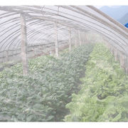 China Plastic insect screen