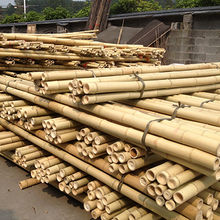 best bamboo cane pole stake all decor ideas for fences.htm bamboo poles   sticks manufacturers   suppliers from mainland  bamboo poles   sticks manufacturers