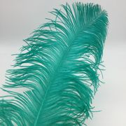 "China 22-24"" Dyed Ostrich Feathers"