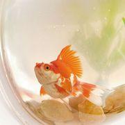 Hanging Wall Fish Tank Acrylic Creative Fish Bowl Aquarium Plant