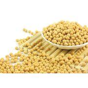 China Soybeans, Organic, Non-GMO