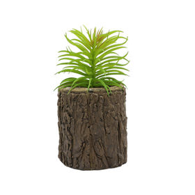 New potted plants green flower from  Quanzhou Leader Industry Limited